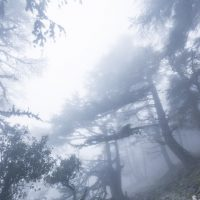 自然・霧の森Fog in the forest
