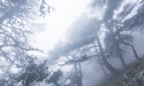 自然・霧の森Fog in the forest