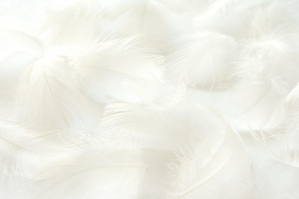 白色の羽根