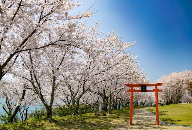 桜 粟嶋神社