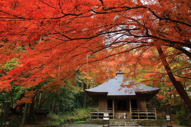 世界遺産 平泉 中尊寺の紅葉