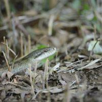 生・蛇snake