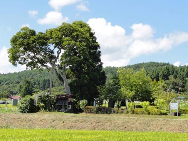 春日八郎記念公園