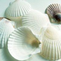 物・食・貝殻