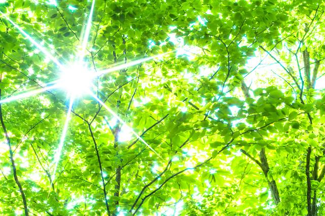 緑色 自然の緑