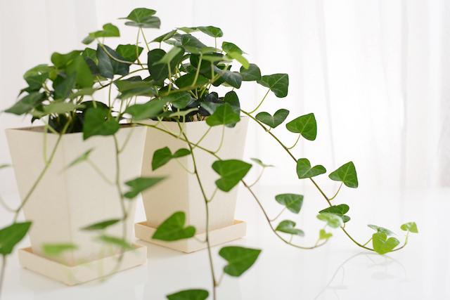 緑色 観葉植物