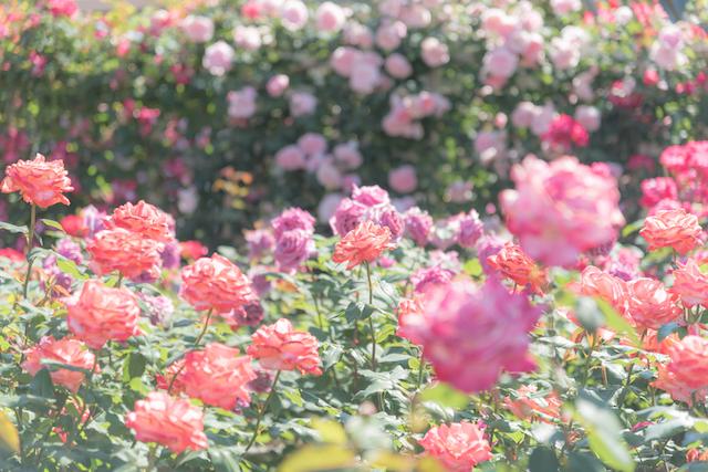風に吹かれる多弁花