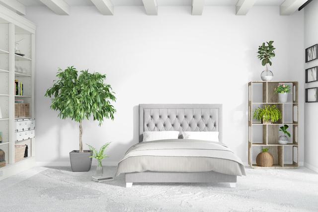 観葉植物 白い部屋