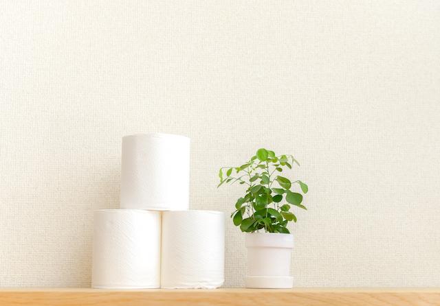 トイレにある観葉植物