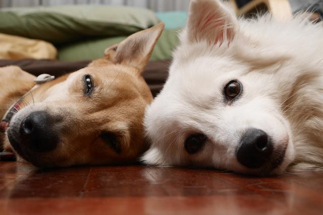 色のイメージと犬のイメージ