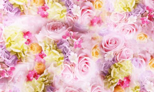 薔薇の花バラ