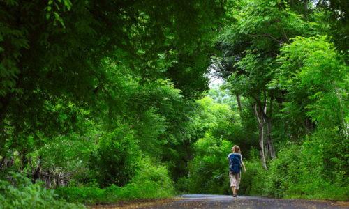 林を歩く女性