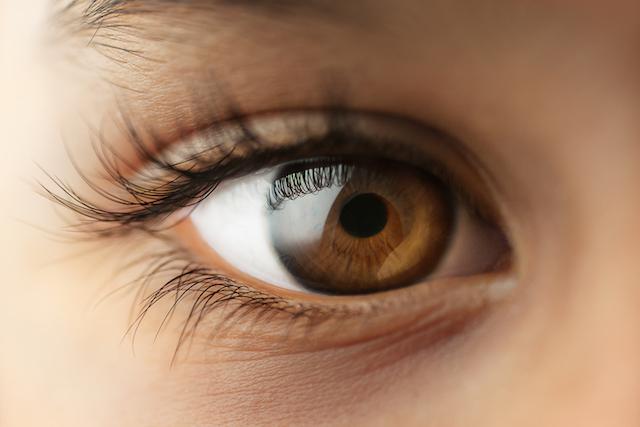 愛らしい澄んだ瞳