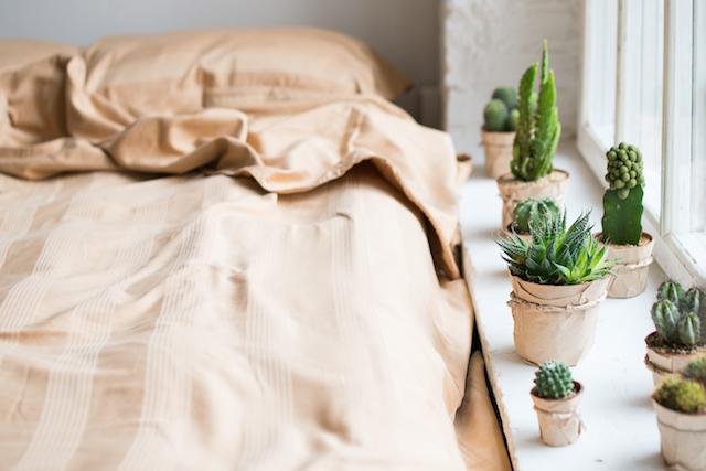 寝室のサボテン