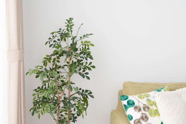 部屋すみに観葉植物