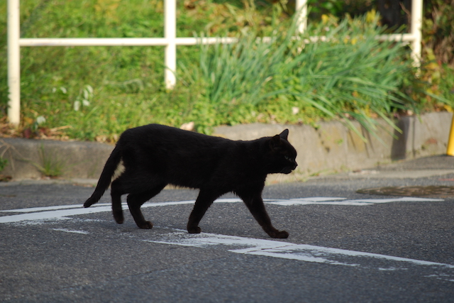 横切る黒猫