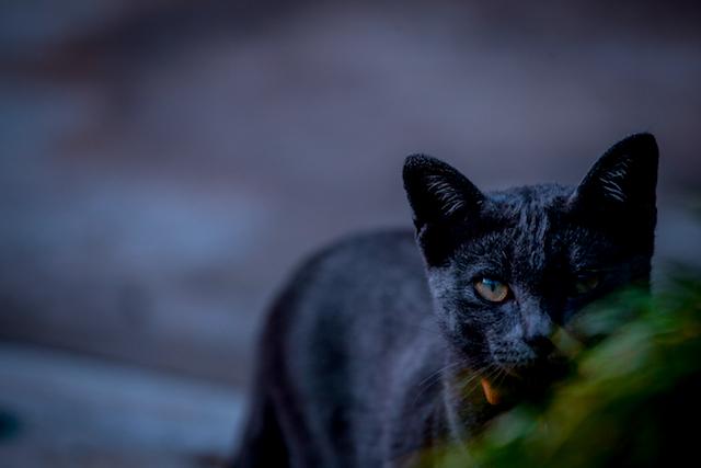怪しい黒猫