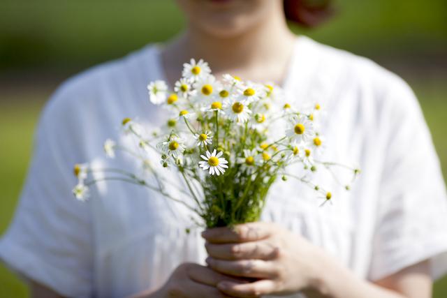 カモミールの花束