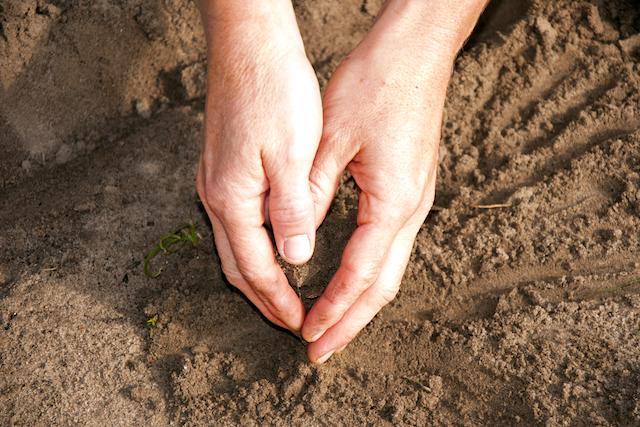 土に埋める