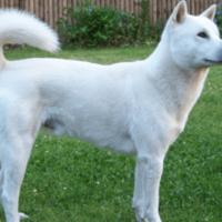 白犬white-dog-35-min