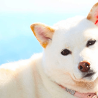 白犬white-dog-names-long-1024x555-min