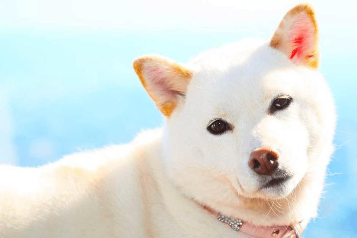 白犬white-dog-names-long-1024x555-min
