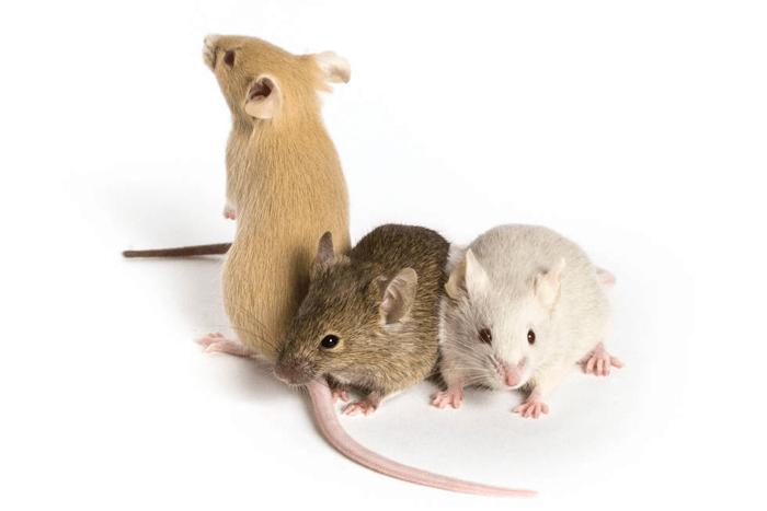 ネズミmouse2-min